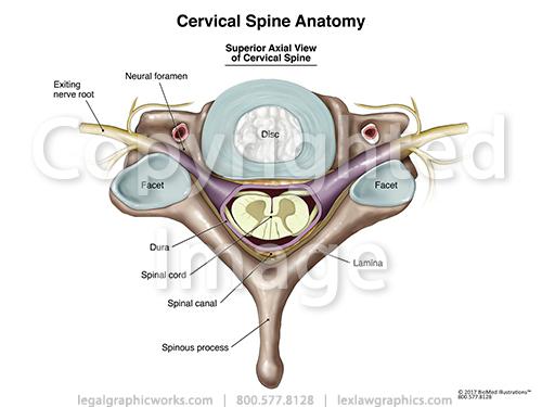 17022 cervical axial