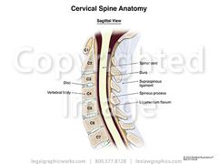 17022 cervical sagittal