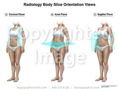 17019 body orientation view