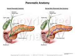 17023 pancreas anatomy