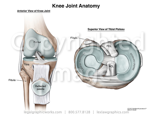 Anterior   tibial view of knee joint anatomy g