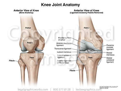 Anterior view of knee joint two views g