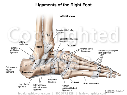 Lateral right ankle ligaments g