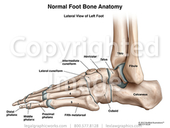 Lateral view of left ankle g