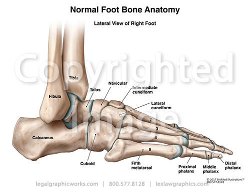 Lateral view of right foot g